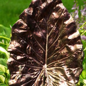 4759OR Chameleon Pearls  on a concrete leaf yard art